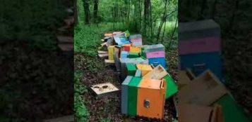 La Guida - Arnie ribaltate e milioni di api morte, apiario distrutto in un raid notturno (video)
