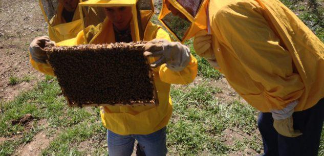 La Guida - Meteo pazzo, api ridotte alla fame e miele a rischio