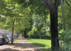 La Guida - Piante affette da tarlo asiatico saranno abbattute in Corso Kennedy