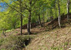 La Guida - Intervento della squadra di operai forestali a Valmala
