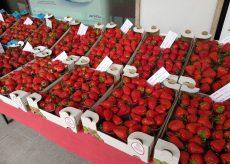 La Guida - Peveragno, domenica 13 giugno il mercato della fragola