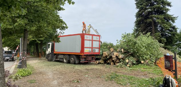 La Guida - Interventi sugli alberi per il tarlo asiatico, Corso Kennedy chiuso al traffico