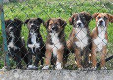 """La Guida - È iniziato il processo """"Nero Wolf"""" sul traffico illegale di cuccioli di cane"""