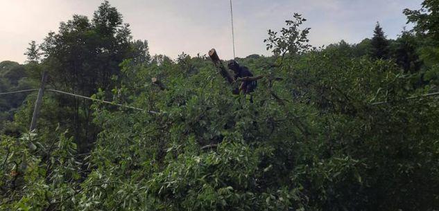 La Guida - Rimosso il noce caduto su un cavo Telecom