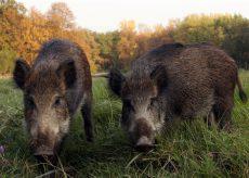 La Guida - Danni da fauna selvatica: approvata risoluzione in Senato