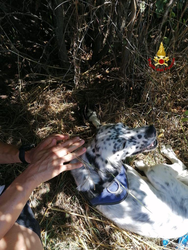 Cane setter intrappolato in una tagliola