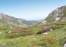 La Guida - Magliano Alpi, il Comune con un territorio di pianura e uno di montagna