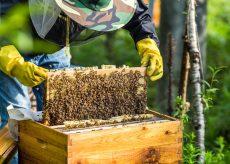 """La Guida - """"I fondi europei per garantire la biodiversità vadano agli apicoltori"""""""