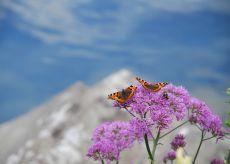 La Guida - Nona edizione del progetto di monitoraggio farfalle