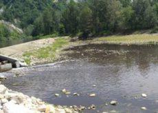 La Guida - Acqua marrone e pesci morti nel Tanaro: l'Arpa indaga