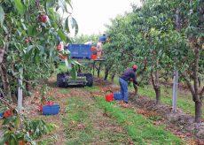 La Guida - Cuneo, serata dedicata al tema dei braccianti agricoli stagionali