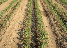 La Guida - Siccità e agricoltura: dati, conseguenze e provvedimenti
