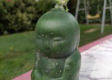 La Guida - A Farigliano da un cetriolo è nato il piccolo Buddha