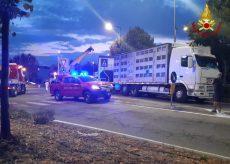 La Guida - Camion carico di maiali si rovescia in via Cuneo a Fossano
