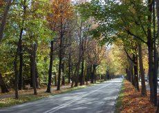 La Guida - Niente area pedonale in Viale Angeli domenica 17 ottobre