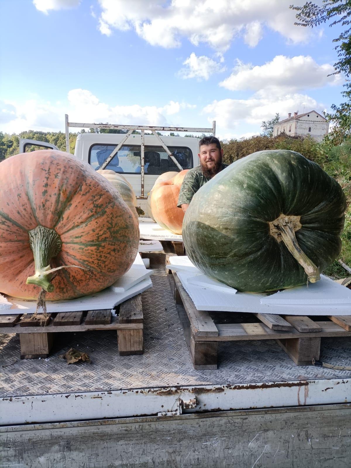 Farigliano - Andrea Bertone e le sue zucche giganti