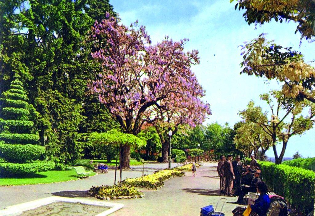 Archivio Mario Zauli 1961 Giardini pubblici con magnolia