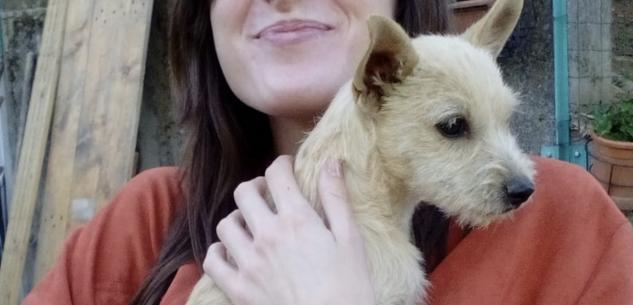 La Guida - Smarrita cagnolina in corso Giolitti a Cuneo