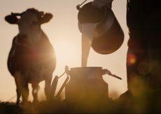La Guida - La filiera lattiero-casearia protagonista al meeting di Staffarda